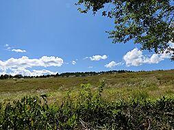 清里 野草の丘