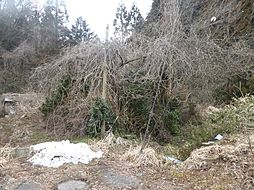 福井市大森町64字松木谷 土地