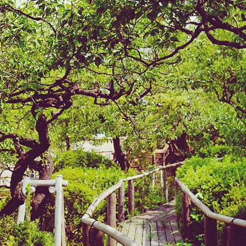 区立池上梅園 約700m(徒歩3分)