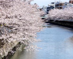 仙台堀川 約150m(徒歩2分)