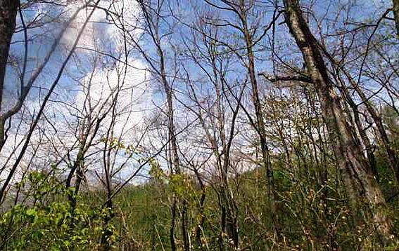 土地-北佐久郡軽井沢町大字長倉鶴溜 北側が傾斜地となるため冬には浅間山が望めます。