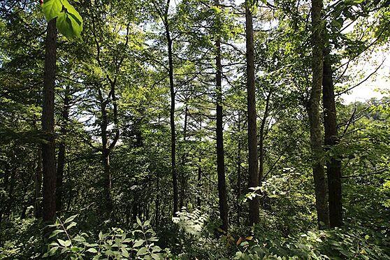 土地-北佐久郡軽井沢町大字軽井沢旧軽井沢 敷地内は緩やかな傾斜なので、手を加えるとお庭でも遊べそうですね。
