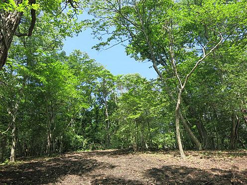 土地-北佐久郡軽井沢町大字軽井沢 見渡すかぎり「緑」があります。空の大きさを体感。
