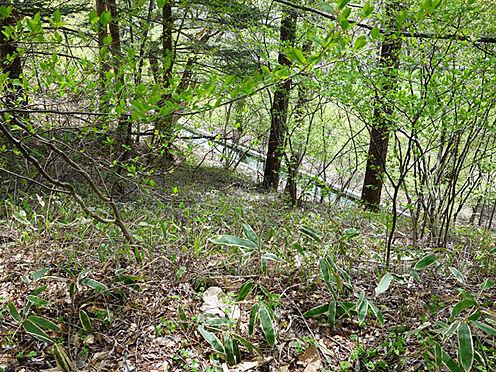 土地-北佐久郡軽井沢町大字長倉 土地の下には用水路があります。