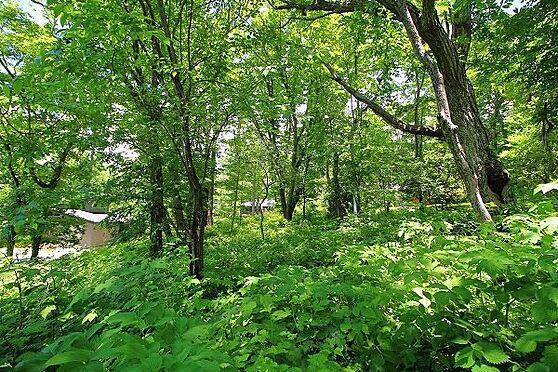 土地-北佐久郡軽井沢町大字長倉 敷地南側から北側。お好きな木々を残してガーデンデザインをお楽しみください。