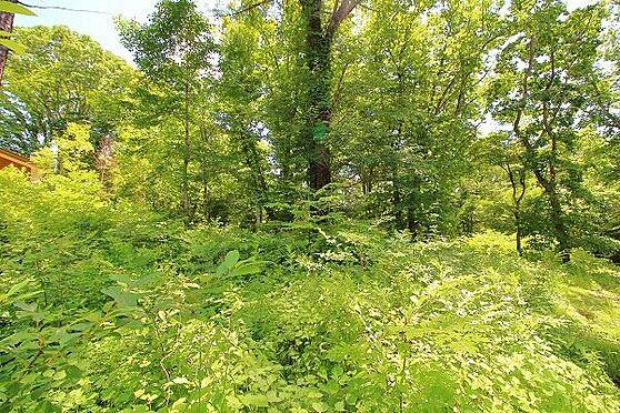 土地-北佐久郡軽井沢町大字長倉 これだけ日当たりが良いので、下草を刈って丁寧にお手入れをすれば素敵な芝庭を造ることができそうですね。