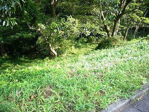 土地-伊豆の国市韮山多田 前面道路の様子。位置指定道路になっております。
