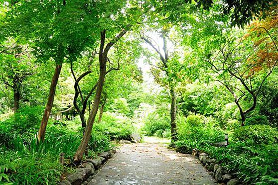アパート-練馬区旭丘1丁目 江古田屋敷の森緑地