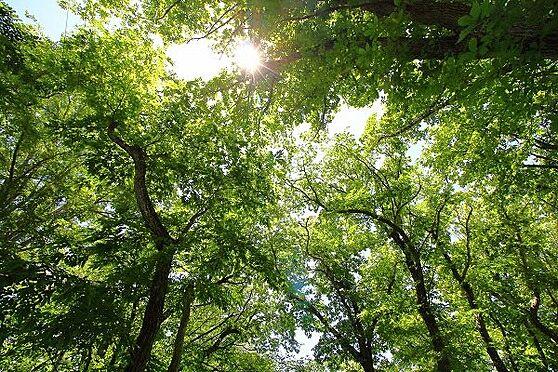 土地-北佐久郡軽井沢町大字長倉 木々と太陽、綺麗な青空がお見事です。葉が付いた際の木漏れはとても気持ち良さそうです。