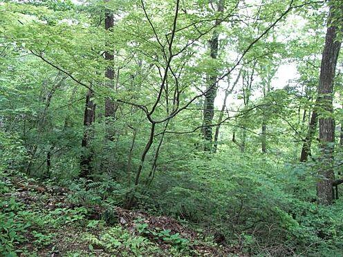 土地-北佐久郡軽井沢町大字長倉 敷地の中はこのように落ち着いております。唐松や松等が生えています。