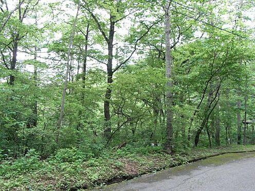土地-北佐久郡軽井沢町大字長倉 木々に囲まれた軽井沢の緑陰の醍醐味を。