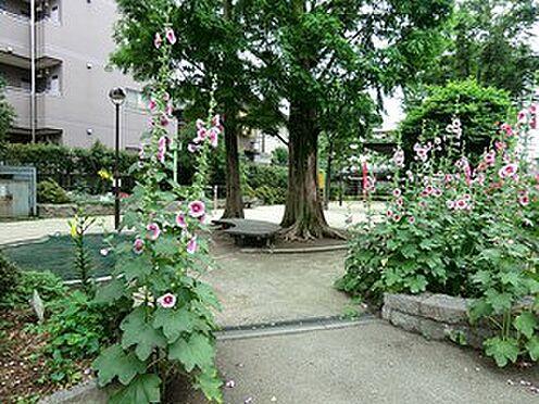マンション(建物全部)-杉並区梅里2丁目 周辺環境:松ノ木公園