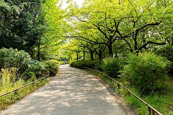 中古マンション-品川区八潮5丁目 緑道公園は緑がたくさんあります。お散歩やマラソンに最適です。