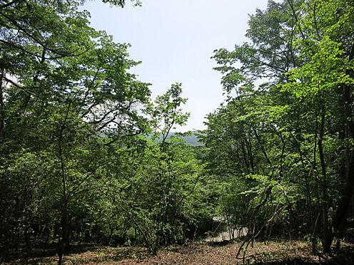 土地-北佐久郡軽井沢町大字軽井沢 手つかずの自然が残された場所です。綺麗な木々に囲まれています。