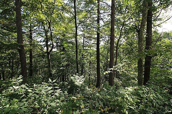 土地-北佐久郡軽井沢町大字軽井沢旧軽井沢 軽井沢らしい大きな木立も多く、緑に囲まれた環境と眺望が楽しめます。