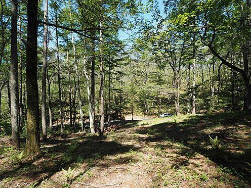 土地-北佐久郡軽井沢町大字長倉 写真の奥は野鳥の森という、なんとも贅沢なロケーションです。