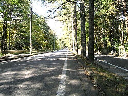 戸建賃貸-北佐久郡軽井沢町大字軽井沢 旧軽井沢「三笠通り」は散策やサイクリングに最適です。