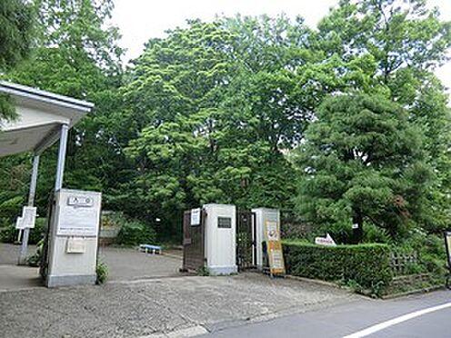 マンション(建物一部)-文京区小石川3丁目 周辺環境:小石川植物園