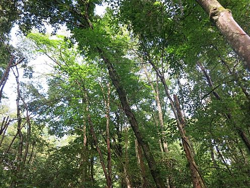 土地-北佐久郡軽井沢町大字長倉 別荘に降り注ぐ木漏れ日が大変心地よい空間を作ってくれます。