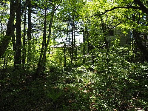 土地-北佐久郡軽井沢町大字長倉 南側から撮影しました。既存の木を考慮して別荘の建築計画を考える、軽井沢ならではです。