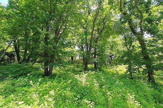 土地-北佐久郡軽井沢町大字長倉 大きな木々が別荘地の歴史を感じさせます。
