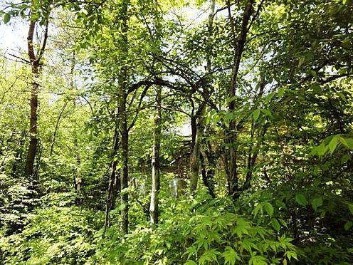 土地-北佐久郡軽井沢町大字長倉 たくさんの樹木が立ち並ぶ現地。