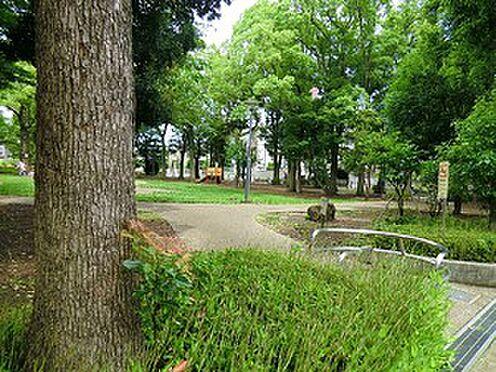 アパート-杉並区天沼3丁目 周辺環境:天沼弁天池公園
