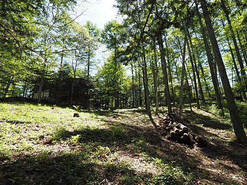 土地-北佐久郡軽井沢町大字長倉 木漏れ日がとても心地よい空間、落葉樹も多く葉っぱが落ちれば尚明るい場所。