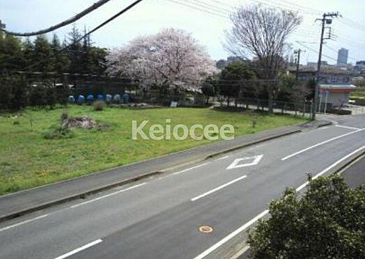 アパート-柏市松ケ崎 周辺は緑も多く手賀川沿いの遊歩道は、春は桜の名所です。