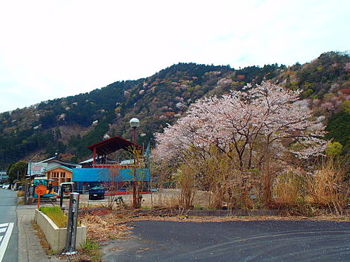 土地-京都市左京区八瀬秋元町 現地からの眺望2(2019年4月撮影)山桜を望む