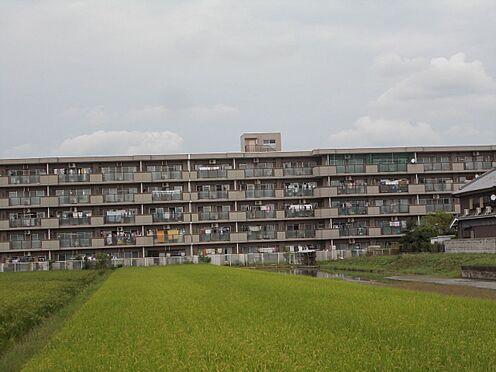 マンション(建物一部)-大和高田市大字根成柿 外観