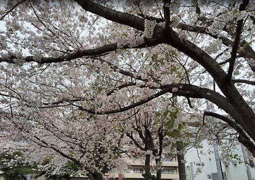 一棟マンション-横浜市鶴見区潮田町3丁目 東潮田公園まで 約180m 小さい公園ですが、春は桜がきれいです