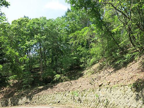 土地-北佐久郡軽井沢町大字軽井沢 閑静な別荘地で、ゆったりとした軽井沢ライフをお楽しみください。