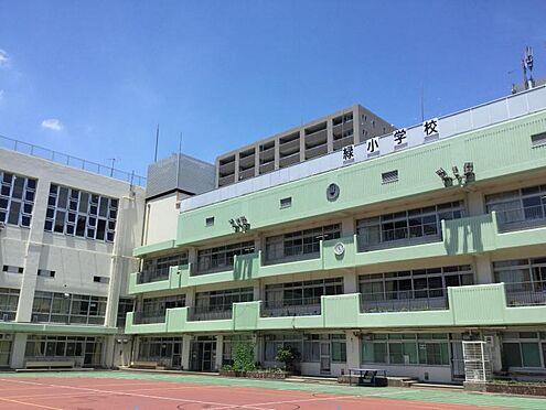 マンション(建物全部)-墨田区緑1丁目 緑小学校 徒歩 約4分(約280m)