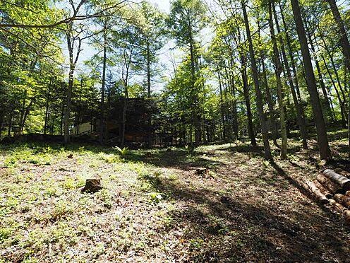 土地-北佐久郡軽井沢町大字長倉 自然で育ってきた木々には目に見えないエネルギーに溢れてます。