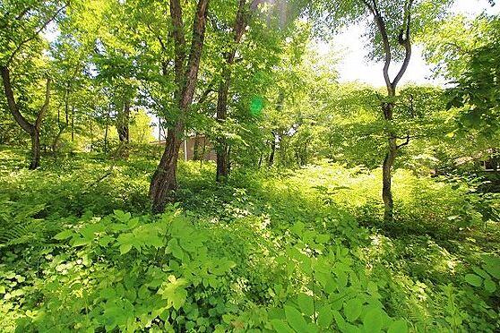 土地-北佐久郡軽井沢町大字長倉 モダン建築やログハウス、室内から自然風景の広がる素敵な別荘をお建てください。