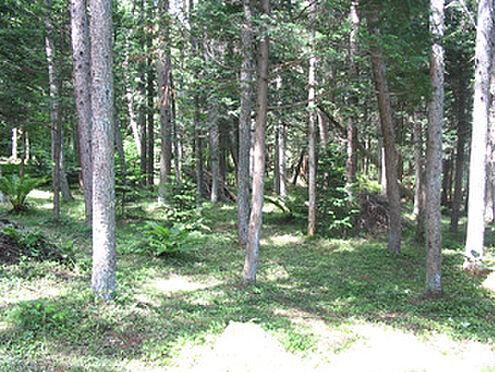 土地-北佐久郡軽井沢町大字長倉 約594坪の広い土地