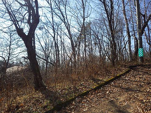 土地-北佐久郡軽井沢町大字峠町 木々をきれいに間引きすれば、日当たりの良い別荘ができそうです。