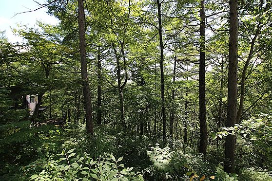 土地-北佐久郡軽井沢町大字軽井沢旧軽井沢 自然が豊富な環境です。