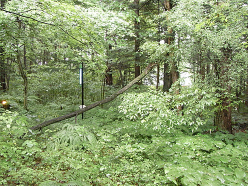 中古一戸建て-北佐久郡軽井沢町大字長倉 お庭にも間接照明がございまして、趣があります。