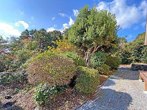 中古一戸建て-伊東市富戸大室高原 南側の日当たりの良いお庭です。家庭菜園などお楽しみいただけますよ。