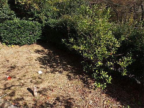 中古一戸建て-伊東市赤沢 【庭】 建物の一段下には庭もあります(ミカンの木)