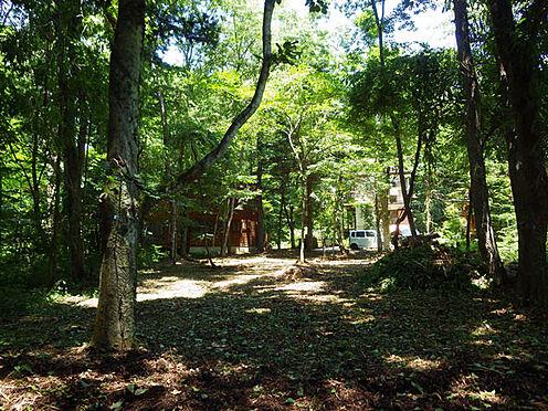 土地-北佐久郡軽井沢町大字長倉 敷地南側からの様子。木立に囲まれたい方は必見です。