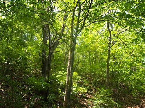 土地-北佐久郡軽井沢町大字長倉 豊かに育った木々の間から降り注ぐ木漏れ日が、とても気持ちよかったです。