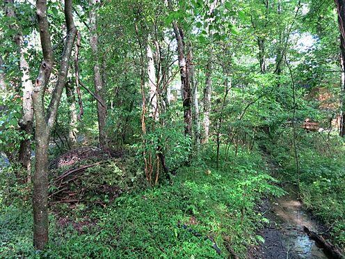 土地-北佐久郡軽井沢町大字長倉 雑木が少し多いですが、いづれも軽井沢の自然が育てた財産です。