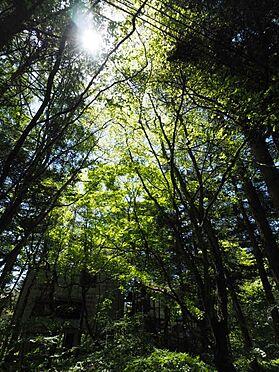 土地-北佐久郡軽井沢町大字長倉 敷地内には大きな木々が数本あります。いづれの木もシンボルツリーになります。