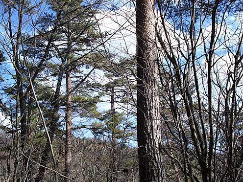 土地-北佐久郡軽井沢町大字長倉 自然の慈しみに溢れた緑と自然が魅力の立地です。森林浴気分を満喫できそうですね。