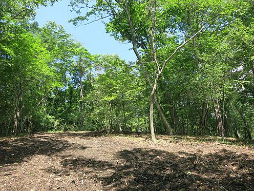土地-北佐久郡軽井沢町大字軽井沢 緑豊かな様々な木々が自生しています。木立に集まる野鳥やリスの姿ものどかです。
