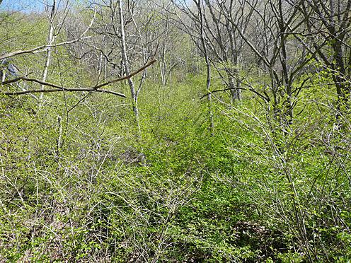 土地-北佐久郡軽井沢町大字長倉 敷地内の緑の様子です。