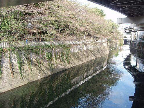 マンション(建物全部)-新宿区早稲田町 【公園】江戸川公園まで717m